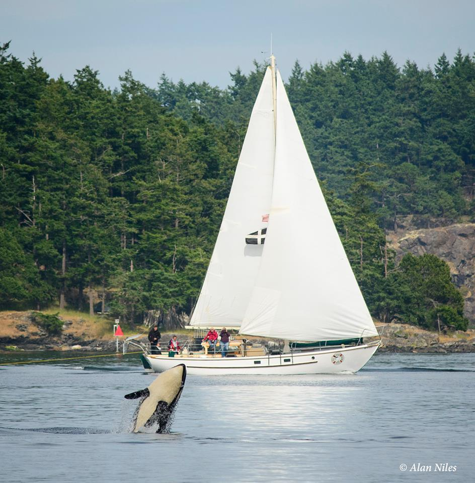 Sails with Whales - All Aboard sailing - Friday harbor, San Juan Islands