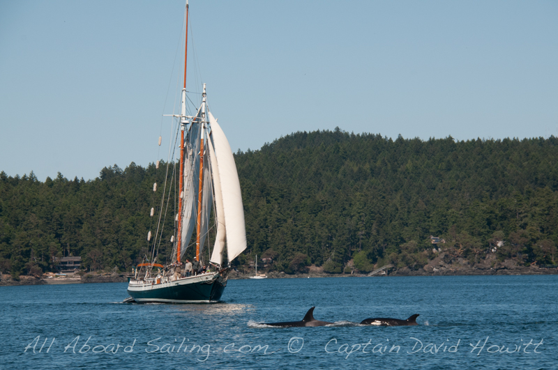 Spike Africa withn Transient Orca whales