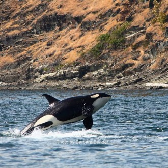 Lime Kiln Point to Turn Point with J and K pod orca whales … and a Submarine