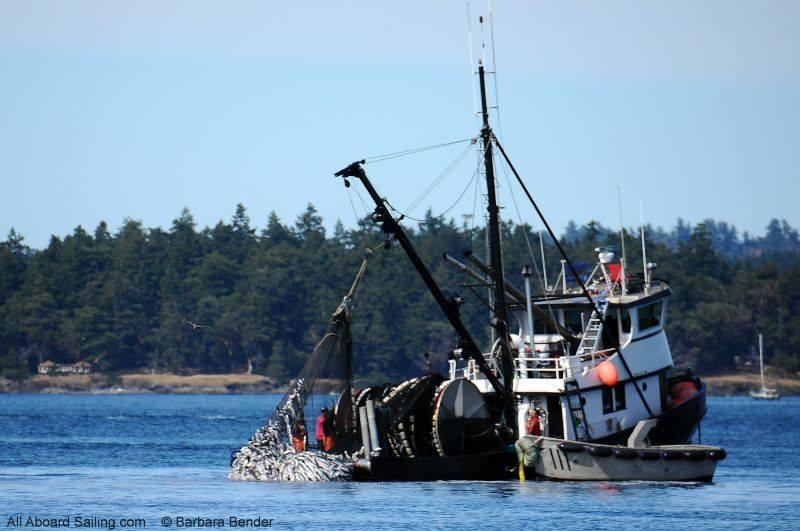 Purse Seine Salmon Fishing