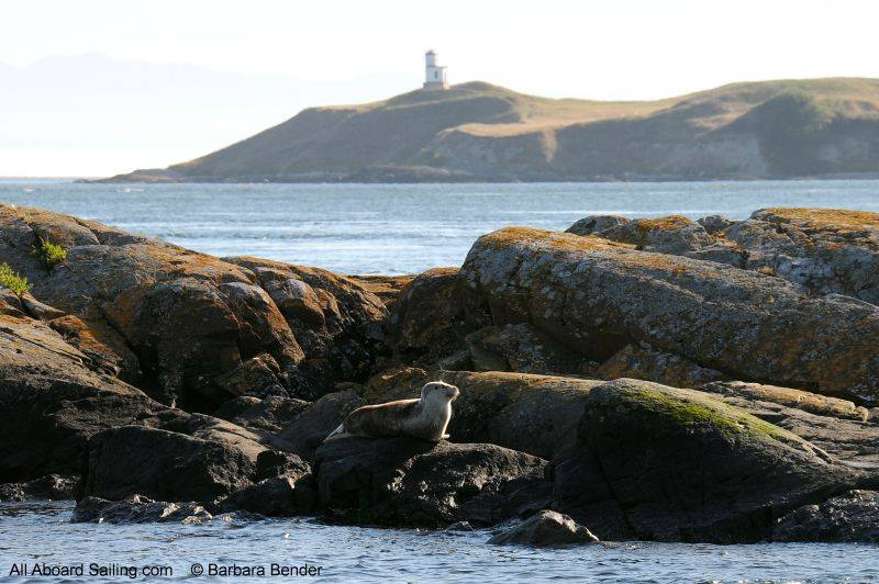 harbor seal with Cattle Point Lighthouse in the background