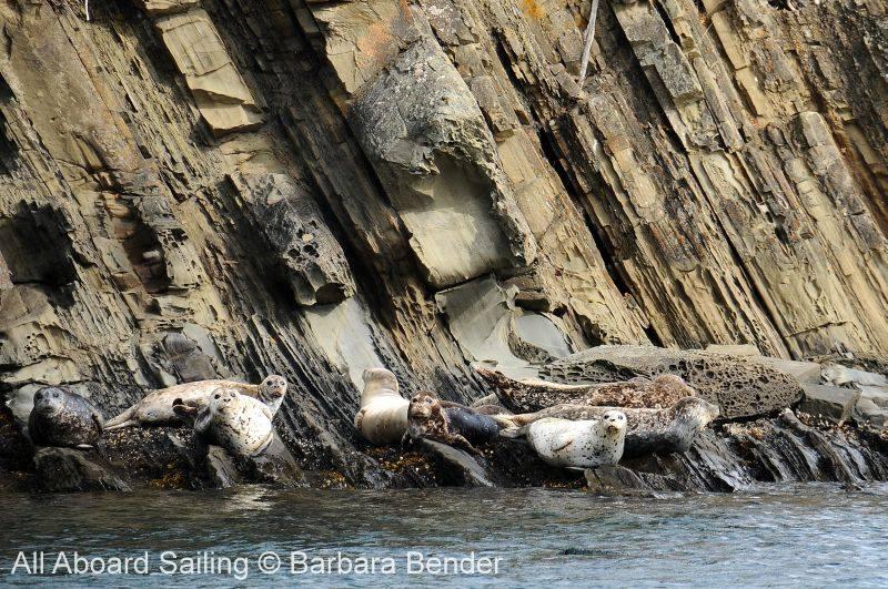 Harbor Seals with honeycomb sandstone