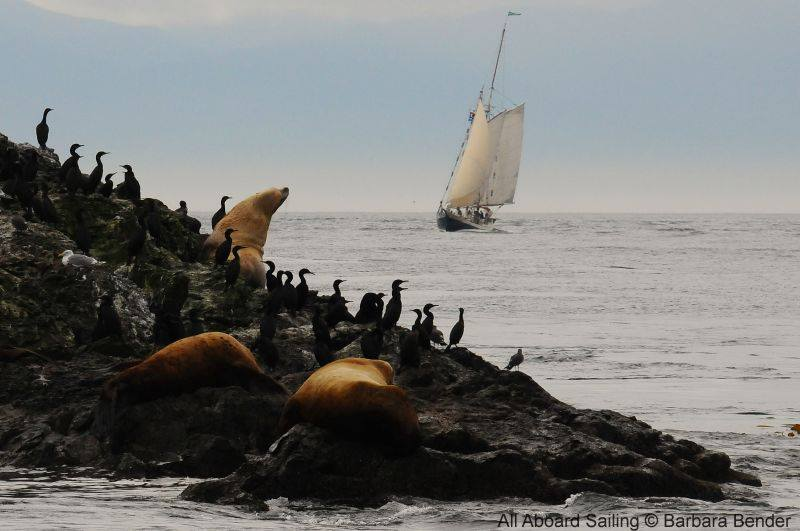 Stellar Sea Lions and schooner Spike Africa