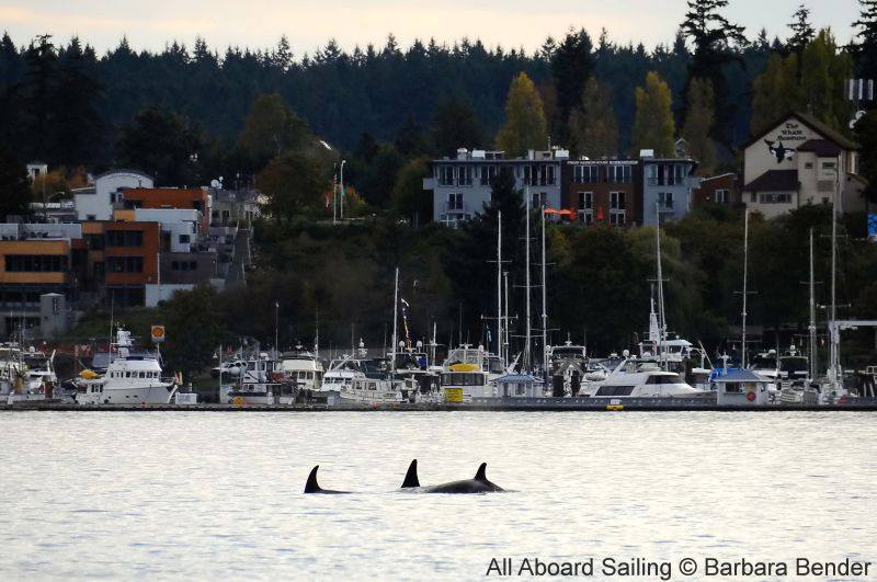 T49As passing Friday Harbor and The Whale Museum