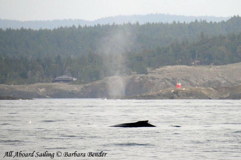 Humpback whale off Iceberg Point