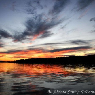 Minke whales foraging and around San Juan Island for a spectacular sunset