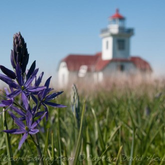 Sail to Patos Island, wildflowers at Alden Point Lighthouse