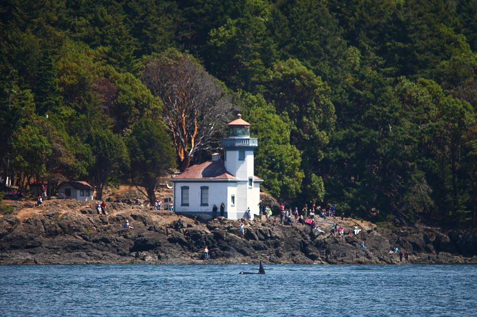 Whale watching at Lime Kiln Point Lighthouse