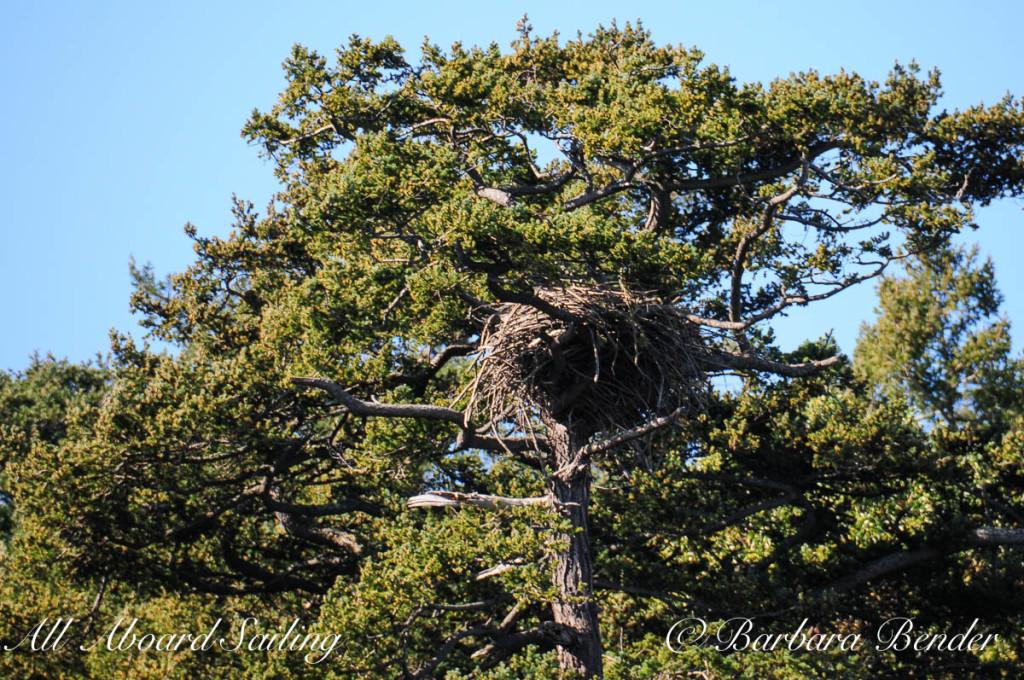 Bald Eagle's Nest, Flattop Island