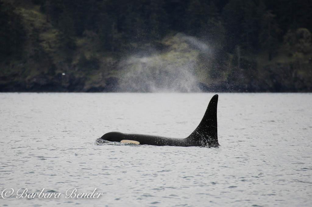 L87 Onyx in Haro Strait