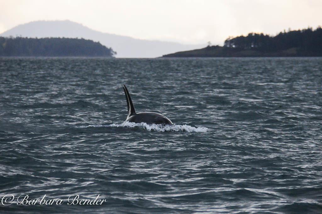 J28 Polaris in Haro Strait