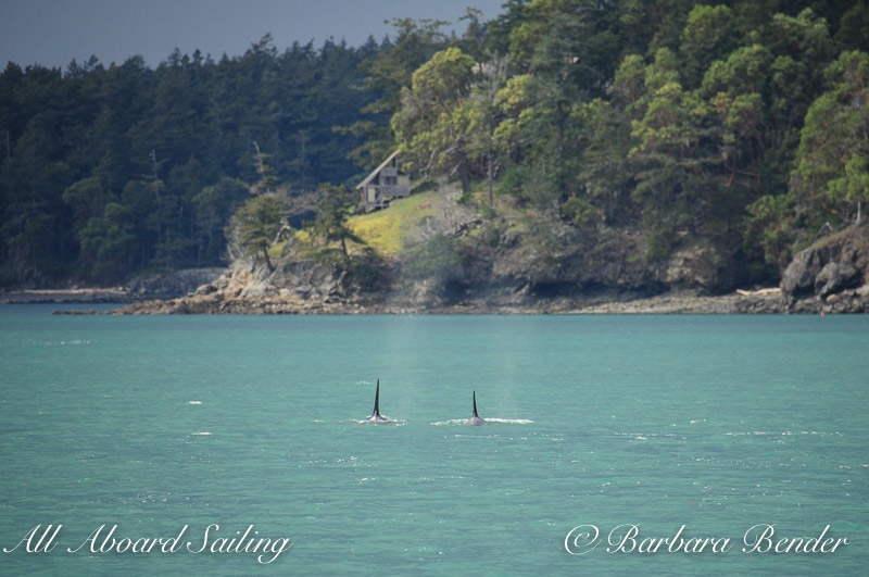Orcas continue North and Sunshine before the squall and water turns turquoise