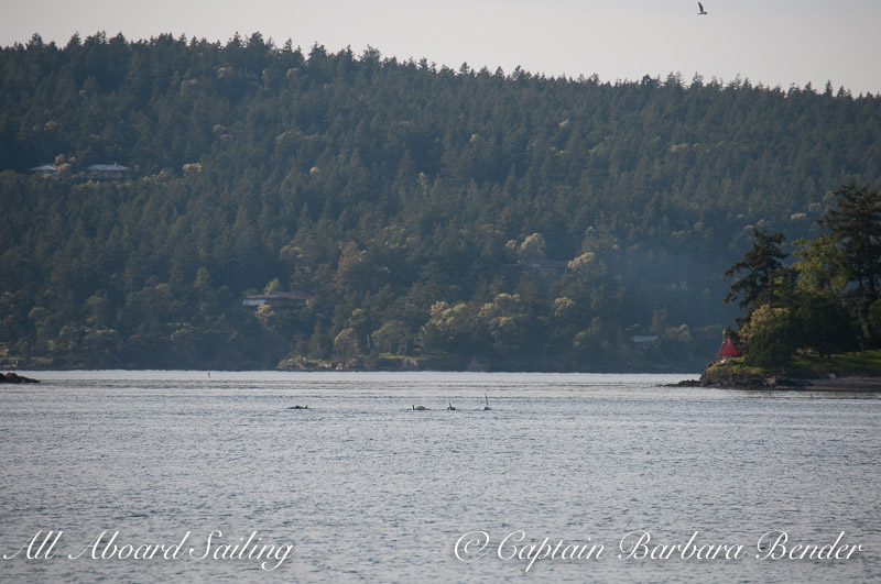 T49As pass through the narrow Pole Pass of Orcas Island