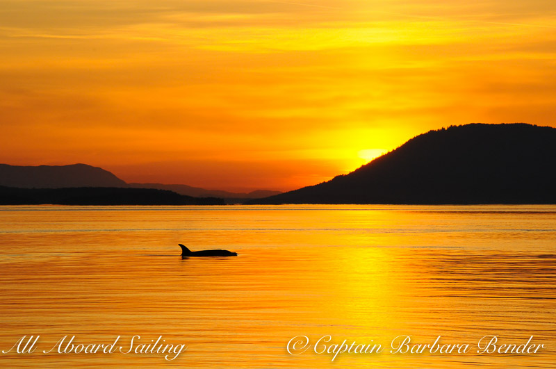 T49A3 with the setting sun, Whale watching sailing in the San Juan Islands