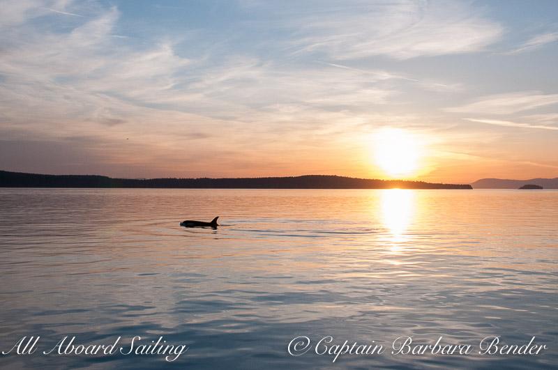 """J47 """"Notch"""". Sunset Whale watching sailing"""