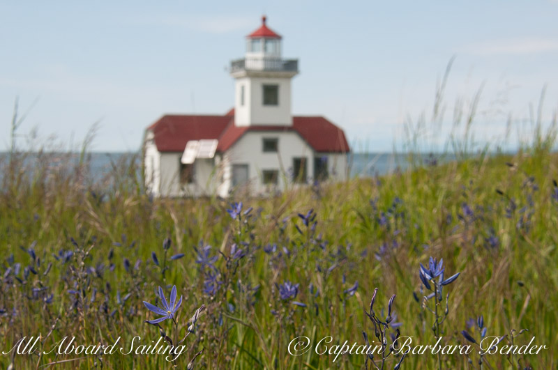 Blue Camas Wildflowers at Alden Point Lighthouse, Patos Island