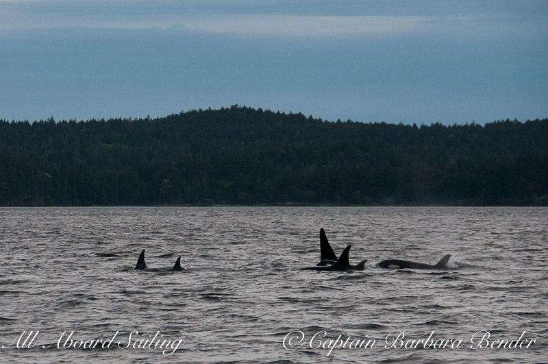 The J-16 family  of  Southern Resident Killer Whales