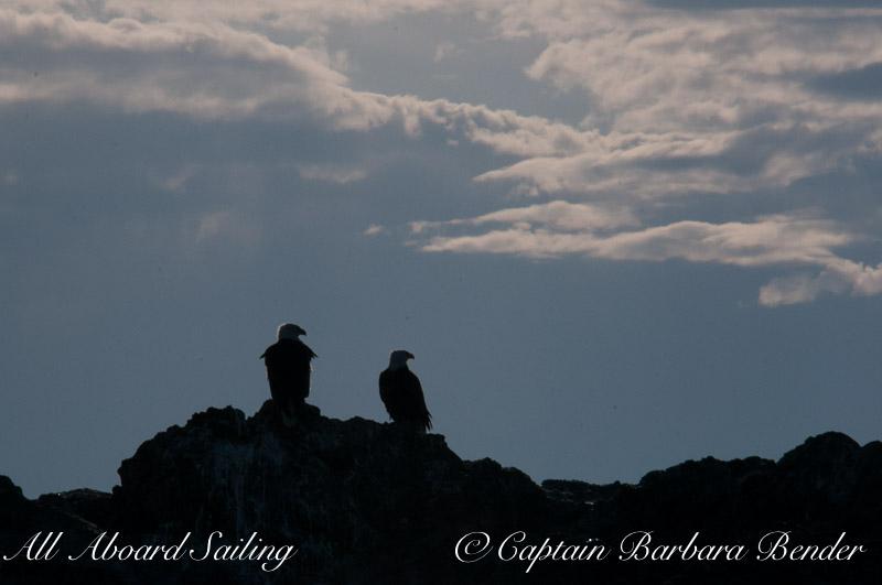 Bald Eagle pair silhouette