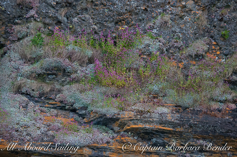 Wildflowers on the rocks of Flattop Island