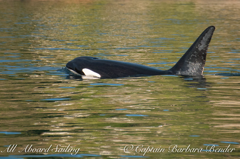 T123A with reflections from Orcas Island