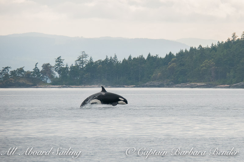 Biggs Orca T36A