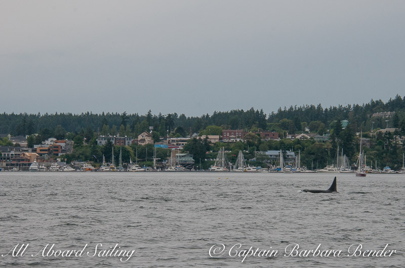 T93 passing Friday Harbor