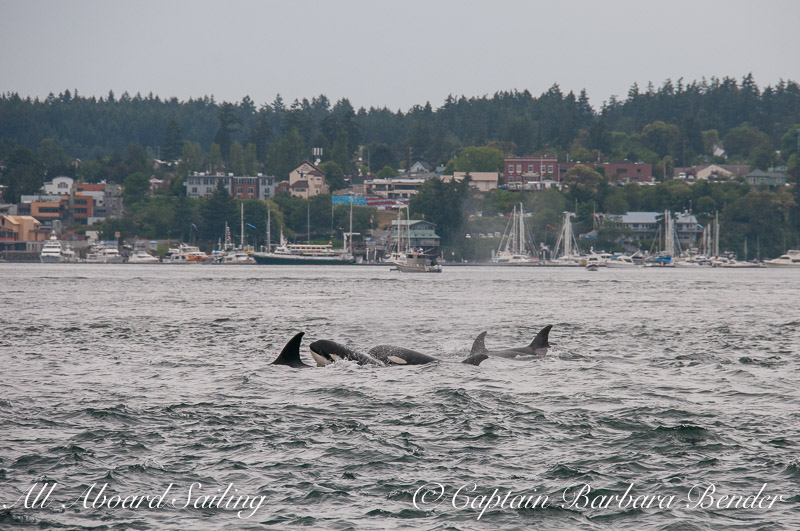 Transients passing Friday Harbor