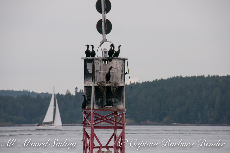 Cormorants on Reid Rock Marker