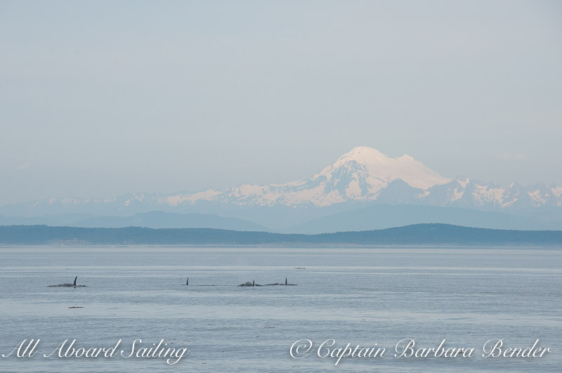 Orcas with Mount Baker