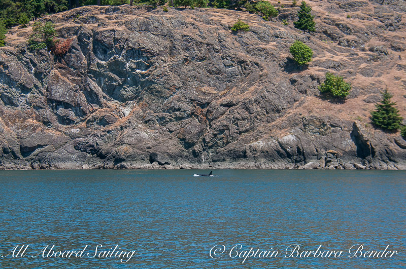 Passing the cliffs north of Lime Kiln Point State Park