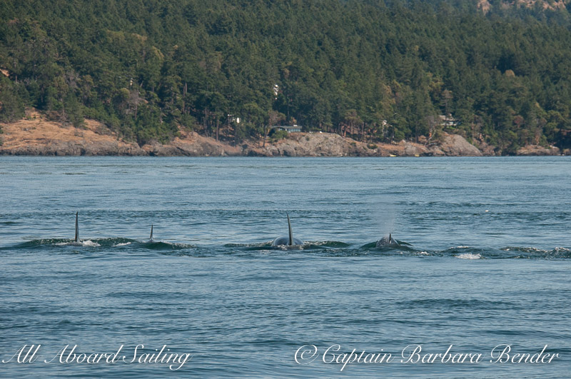 After a brief moment of excitement, all the L47s continued back on course down island as a tight group.