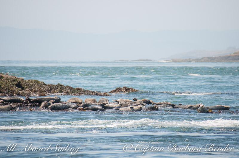 Harbor seals, Cattle Pass
