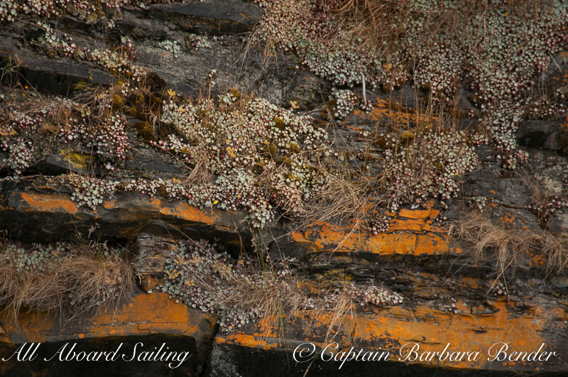 Colored cliff face of thousand year old Lichens