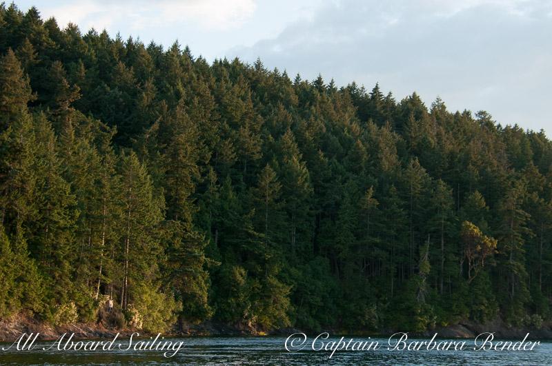 Sunset light on Speiden forest