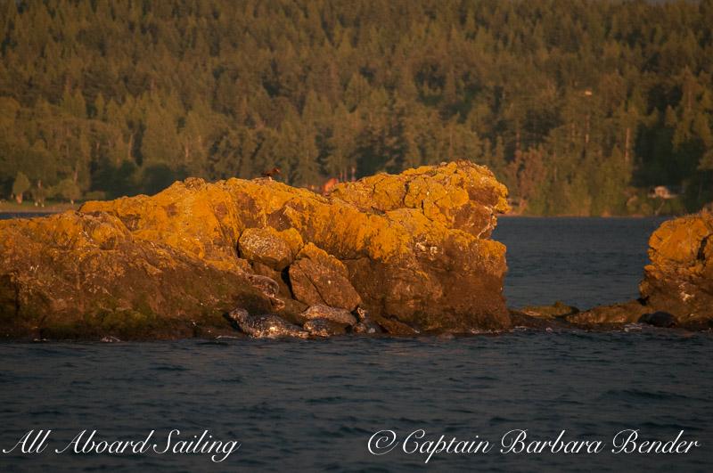Harbor Seal Sentinel Rock