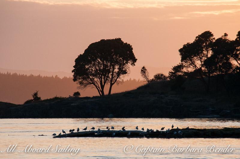 Sunset sail passed Yellow island