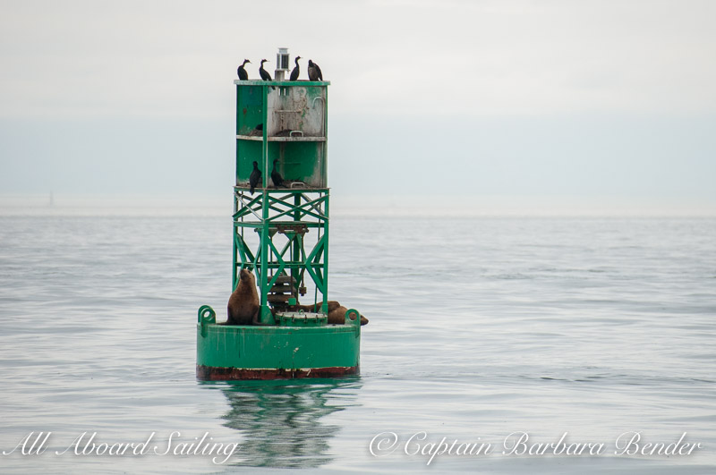 Sea Lions hauled out on Salmon Bank lighted gong buoy. Flashing green every 4 seconds. Visible for 4 miles.