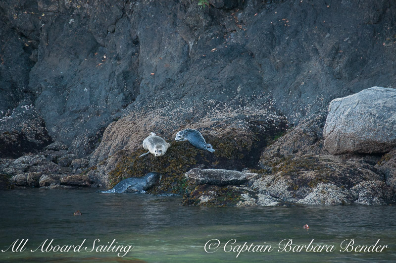 Harbor seals - get out of the water !