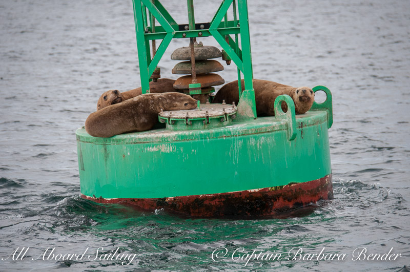 sea lions resting on Salmon Bank buoy