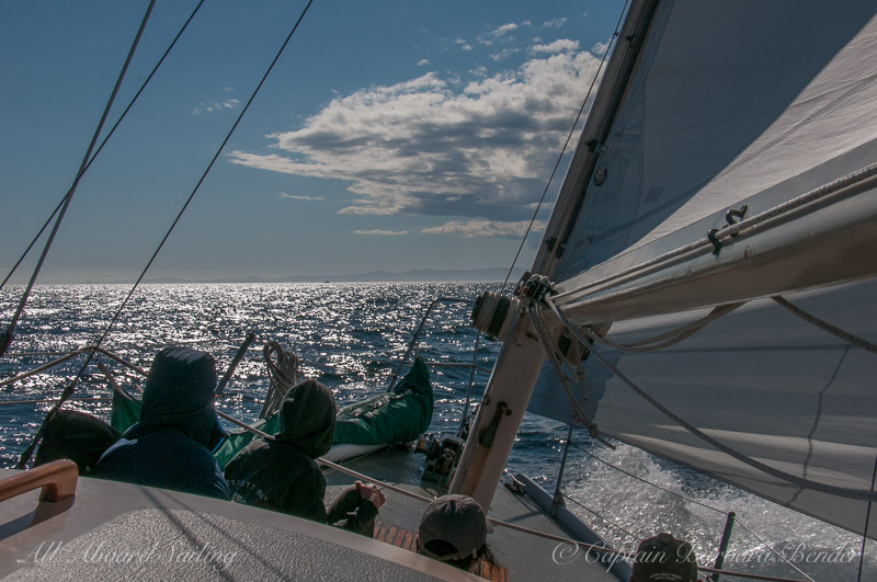 Sailing to meet the whales