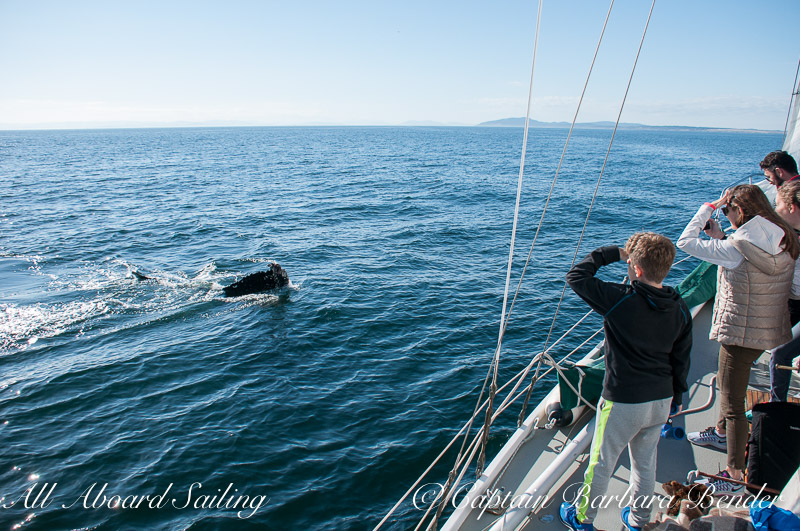 Whale Watching Sailing
