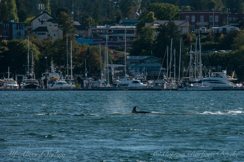 Transient Oracs T65A's passing Friday Harbor