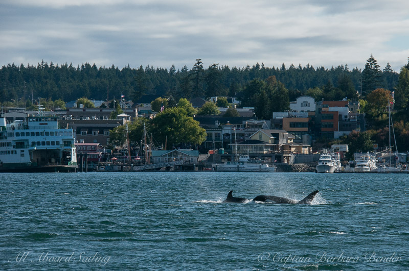 Transient Oracs T65A's passing Friday Harbor Ferry