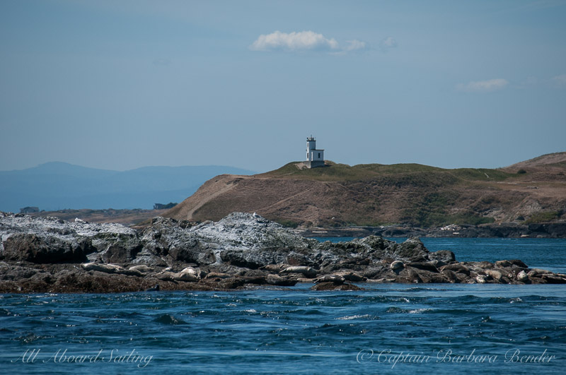 Harbor seals on Whale Rocks with Cattle Point Lighthouse