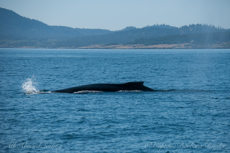 humpback whale near Eagle Point