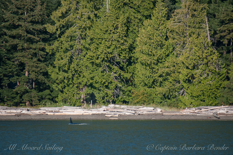 T37 close to shore in President's Channel, Orcas Island