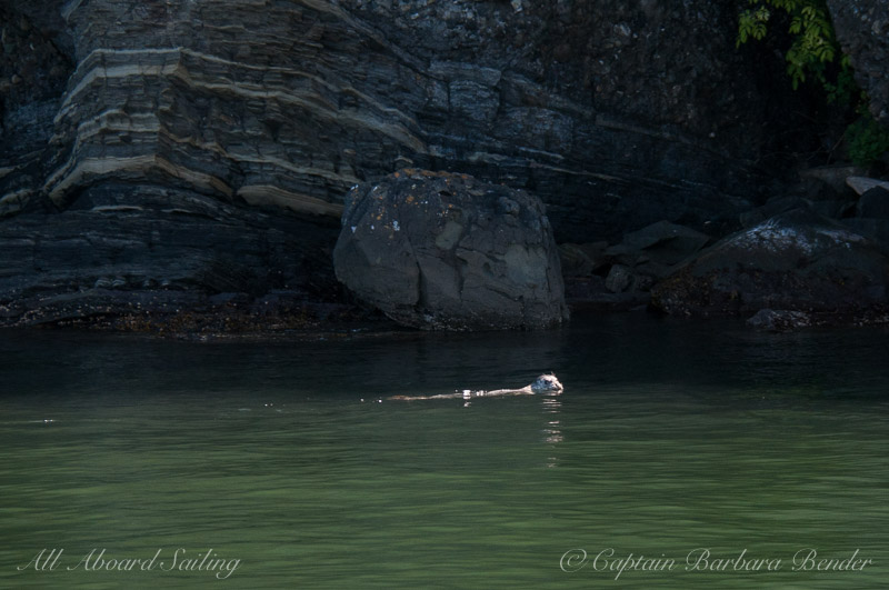 Harbor Seal laptop Island