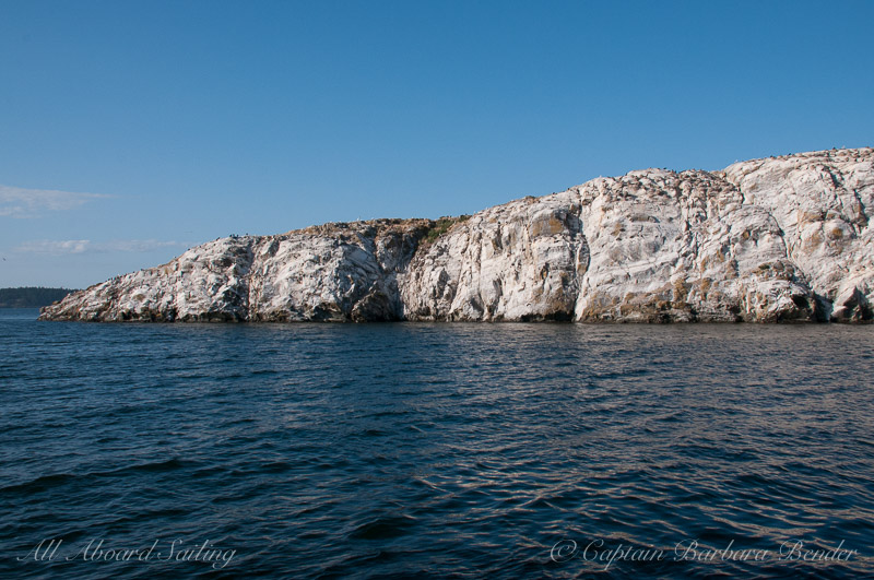 Cormorant Colony on Mandarte Island