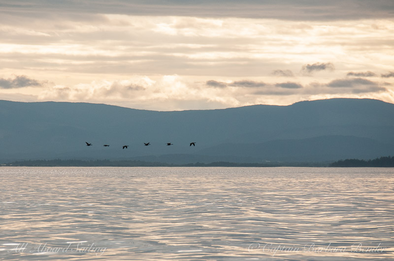 Canada Geese fly through Sunset over Canada