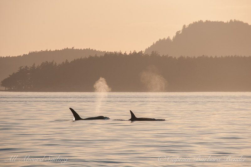 T137A and mom T137 heading off into the sunset